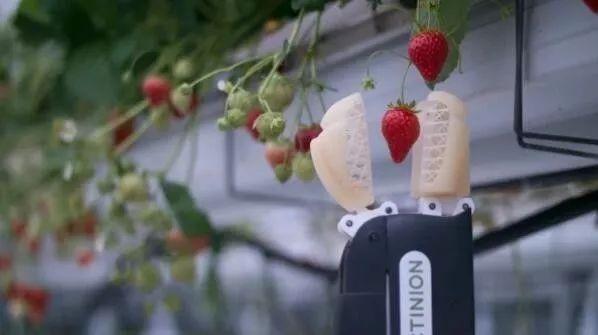 """智能機器人""""入侵""""農業領域,看它們都干了些啥?"""