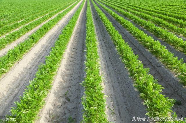 承包100亩地搞种植,可以注册农村合作社吗?
