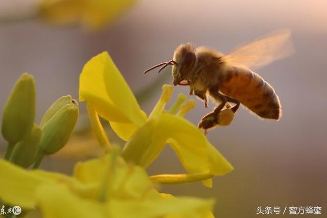 擔心買到假蜂蜜?這里有最全的蜂蜜鑒別方法,幫你買到真蜂蜜!