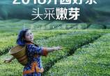五峰毛尖茶叶 特级高山茶日照充足绿茶125g
