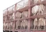 长途运输羊怎么预防应激
