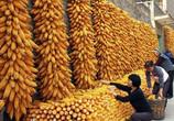 习总书记致贺首个中国农民丰收节
