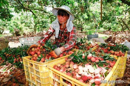 農產品電商市場到底有多大?想要做生意的農民都要懂一點電商知識