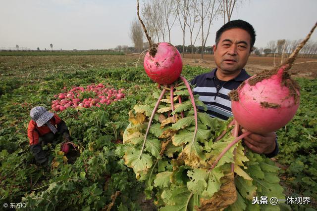 沒有賣不出去的農產品,只有不會賣農產品的人
