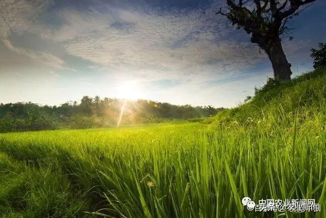 互聯網助力三農,時代的發展,農業有了新高度