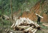 注意!砍自己家的树却被判刑罚款?自己种的树为什么也不能砍?