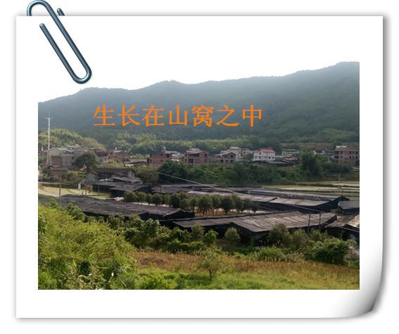 新風景IMG_20170714_161856_副本_副本.jpg