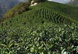 天高云淡     一览茶山