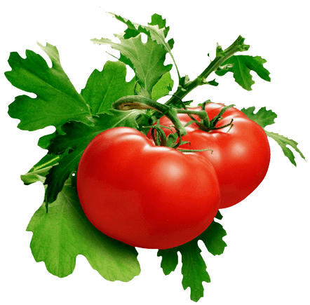 tomato_PNG12588.png